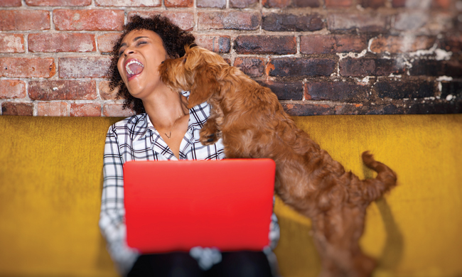 5 Tips for Bringing Your Pet to Work this Summer
