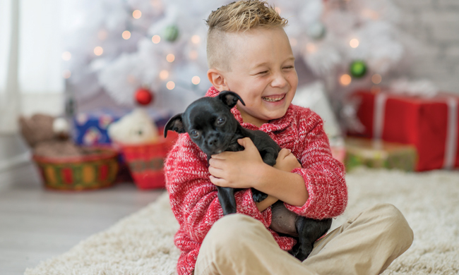 Bring a Pet Home for the Holidays