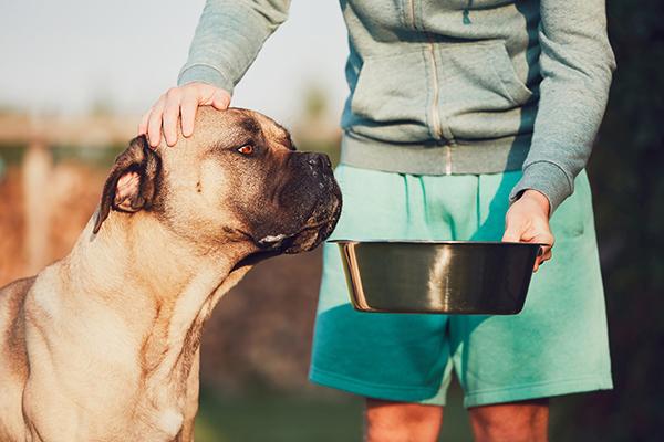 Pets Make Humans Better