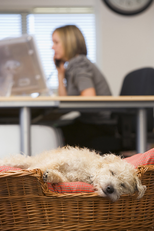 How to Create a Pet-Friendly Workplace