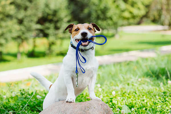 5 Tips for Moving with a Pet
