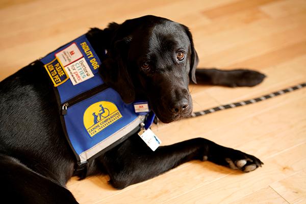 Pets Help Impact Health and Wellness