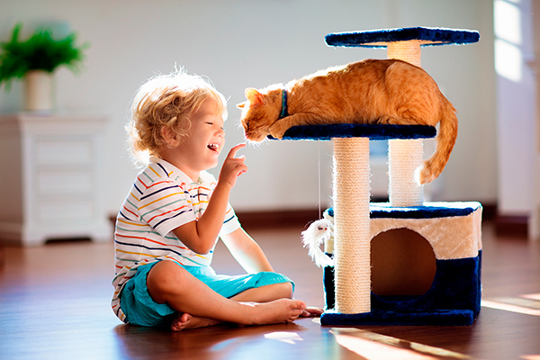 Help Your New Cat Adapt to Your Home