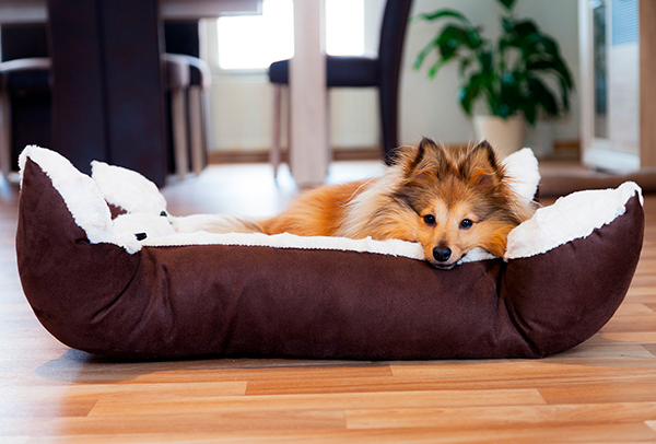 A new bed can instantly change your dog's attitude. Switch up the routine!