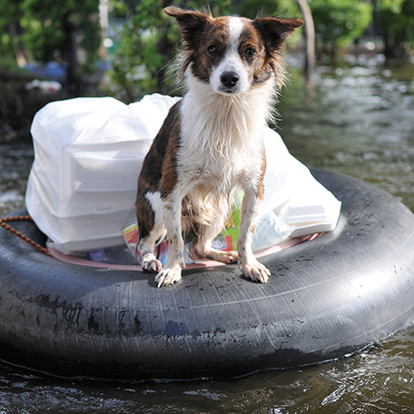 Emergency Preparedness Tips to Help Ensure Pet Safety